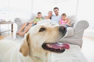 Pet-Allergens